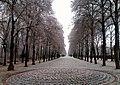 Winter alley - Flickr - Stiller Beobachter.jpg