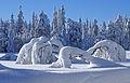 Winter scene (3277481706).jpg