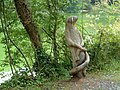 Wood Carving of an Otter holding a Salmon at Castle Espie - geograph.org.uk - 54633.jpg