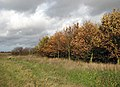 Woodland edge - geograph.org.uk - 1041650.jpg