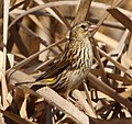 Yellow Bishop 2014 09 07 10 35 46 0236.jpg