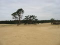 Zandverstuiving hoge veluwe 4.jpg