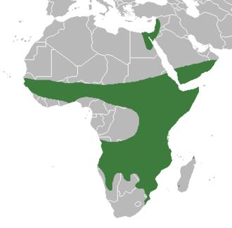 Ficus sycomorus - Image: Zasieg ficus sycomorus distribution