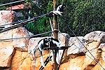 Zoo de Lisboa by Juntas 92.jpg