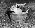"""""""A Basket full of Wool"""" (6360159381).jpg"""