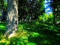 """Bird"" Effigy Mound - panoramio (3).jpg"
