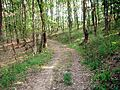 În pădure - panoramio.jpg