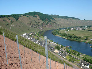 German wine - Steep vineyards along river Mosel, close to the village Ürzig.