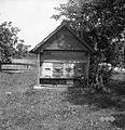 Čebelnjak, Brinje 1961.jpg