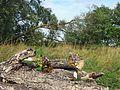 Букетик на брёвнах - panoramio.jpg