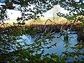 Вид з Юрової гори на Ірдинське болото.jpg