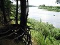 Западная Двина в Верхнедвинске. Western Dvina Verkhnedvinsk. - panoramio.jpg
