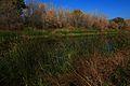 На озере Попово - panoramio.jpg