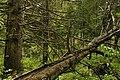 Оковский лес поздней весной.jpg