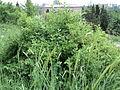 Парк шума Гази Баба во мај (72).JPG