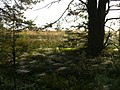 Паутинка в лесу - panoramio.jpg