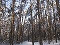 Украина, Киев - Голосеевский лес 177.jpg