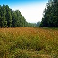 Урочище Дёмино, Пермский край - panoramio.jpg