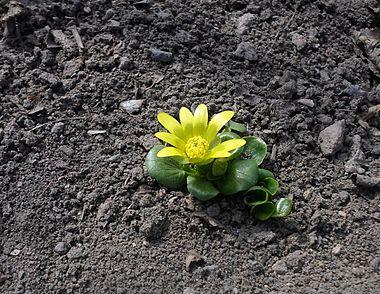 Цветок, 1 марта.JPG