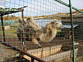 Якутский зоопарк 22.JPG