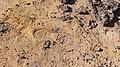 טביעת נעל על החול הצבעוני במכתש.jpg