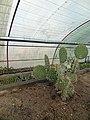 گلخانه کاکتوس دنیای خار در قم. کلکسیون انواع کاکتوس 31.jpg