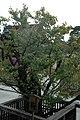 日本京都寺院254.jpg