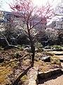 梅もきれい - panoramio.jpg