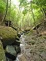 沖ビリ沢 ブナの森の中のナメ 2014-05-25 - panoramio.jpg