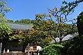 王禅寺・禅寺丸柿原木(川崎市まちの樹50選) - panoramio.jpg