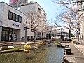 高知市はりまや橋の西の桜 - panoramio.jpg