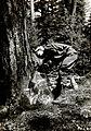 1932. Walter J. Buckhorn examines field cage on ponderosa pine Dendroctonus brevicomis Lec. brood trees. Prineville, Oregon. (34511768440).jpg