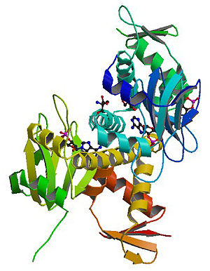 CAMP receptor protein - Structure of the E. coli Cyclic AMP Receptor Protein.