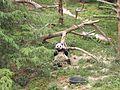 2006-06-03 - Mei Xiang.jpg