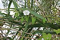 2015.09.05 11.25.57 IMG 0350 - Flickr - andrey zharkikh.jpg