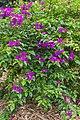 2016 Singapur, Ogrody botaniczne (060).jpg