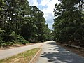 2017-07-12 13 37 13 View south along Virginia State Route 343 at U.S. Route 60 (Shore Drive) within First Landing State Park in Virginia Beach, Virginia.jpg