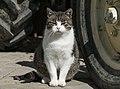 2017 Kot domowy 1.jpg
