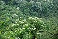 315, Taiwan, 新竹縣峨眉鄉湖光村 - panoramio (39).jpg