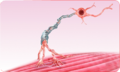3D Medical Animation Still of Neuron.png