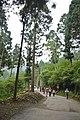 558, Taiwan, 南投縣鹿谷鄉內湖村 - panoramio (24).jpg