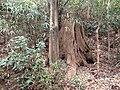 5 Chome Jindaiji Motomachi, Chōfu-shi, Tōkyō-to 182-0017, Japan - panoramio (18).jpg
