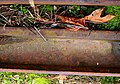 90 lb rail (3071829262).jpg