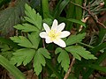 ANEMONE! No projectors, though -( (4472460475).jpg