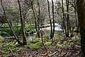 A Glimpse of the River - geograph.org.uk - 408018.jpg