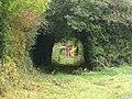 A Tunnel of Trees, Summerisland Road, Moy. - geograph.org.uk - 579295.jpg
