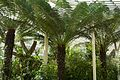 A Visit To the Botanic Gardens In Glasnevin (5469285727).jpg