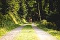 A black forest walk (Unsplash).jpg