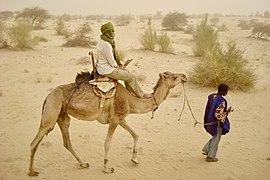 A camel ride in the Sahara Desert.jpg