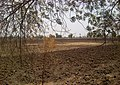 A farm waiting for rain, note black regur soil - panoramio.jpg